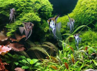 Fish Tank Filters