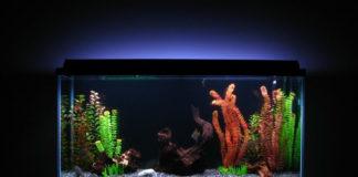 10 Gallon Fish Tank