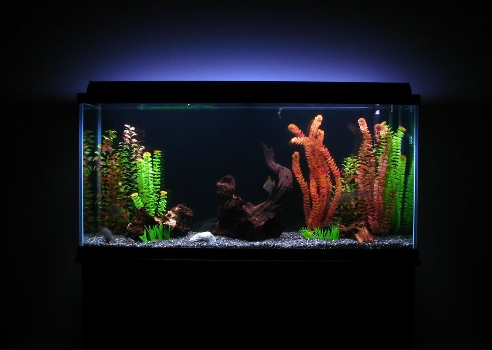 Sunsun hw 304b canister filter review fish tank club for Fish tank review