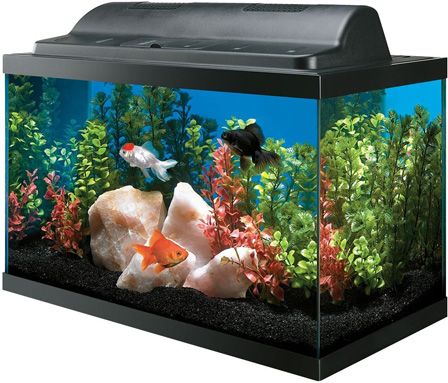 All Glass 10 Gallon Aquarium