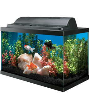 Top 5 best 10 gallon fish tanks fish tank club for Best fish for 5 gallon tank
