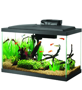 Aqueon 10 Gallon Fish Tank