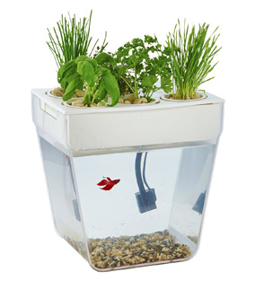 Top 5 Best Betta Fish Tanks In 2018 Fish Tank Club