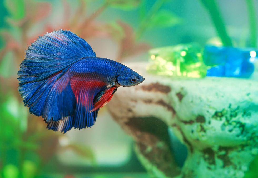 Top 5 best betta fish tanks in 2018 fish tank club for Betta fish care water