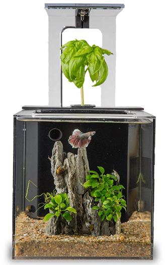 EcoQube Betta Fish Tank