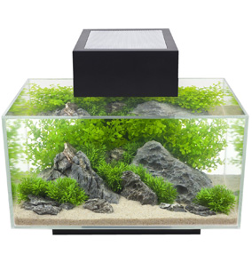 Fluval Edge Betta Fish Tank