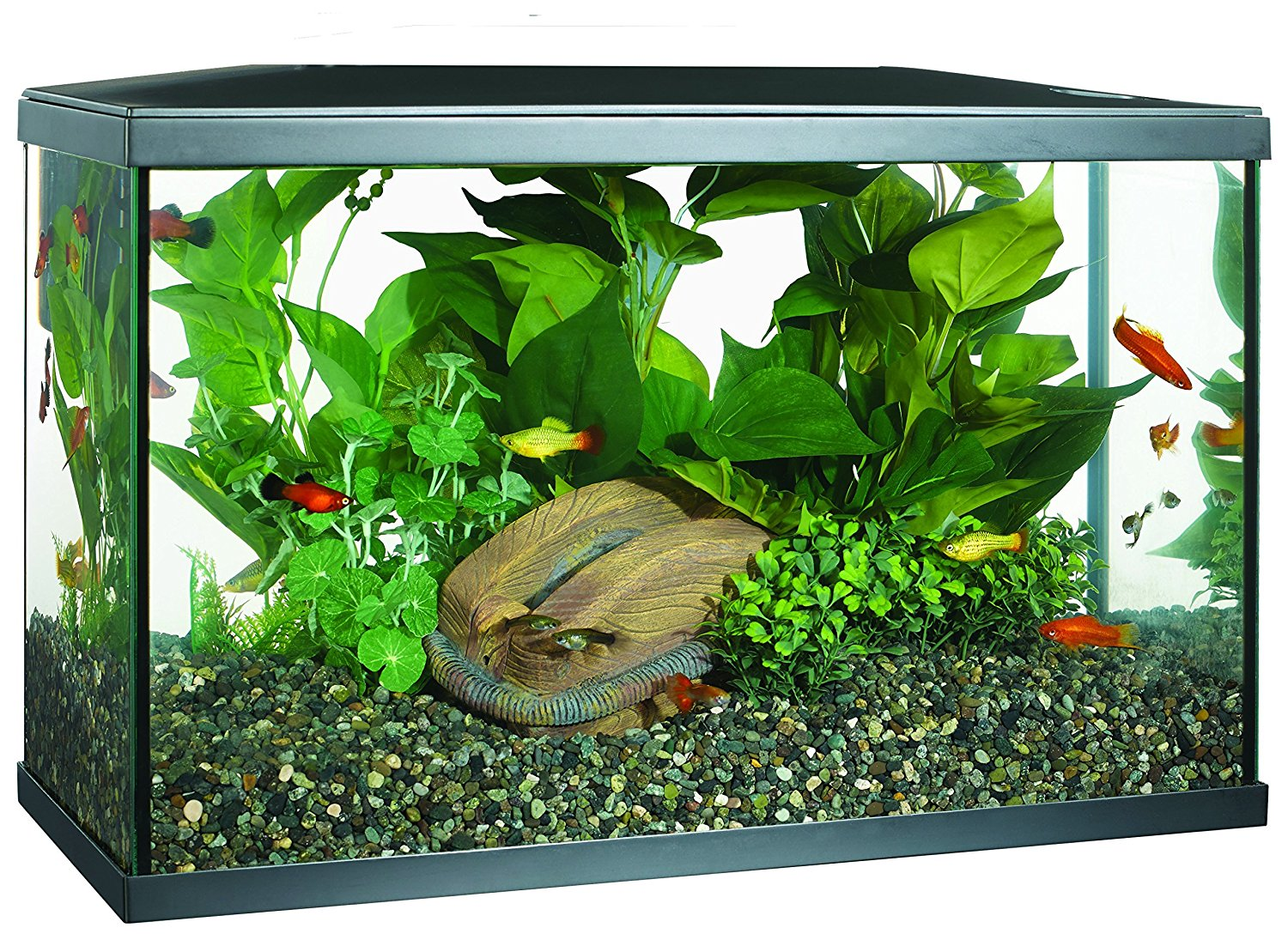 Top 5 Best 10 Gallon Fish Tanks