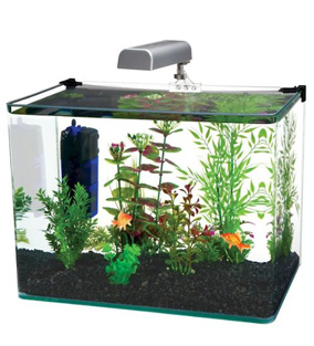Penn Plax 10 Gallon Fish Tank