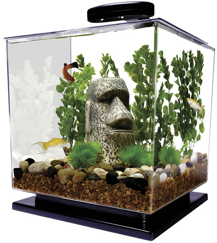 Tetra Betta Fish Tank