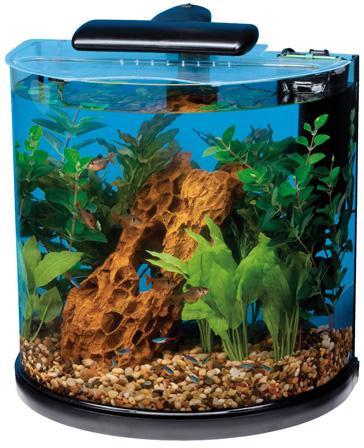 Top 5 Best 10 Gallon Fish Tanks Fish Tank Club