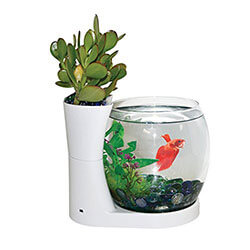Elive Betta Fish Bowl