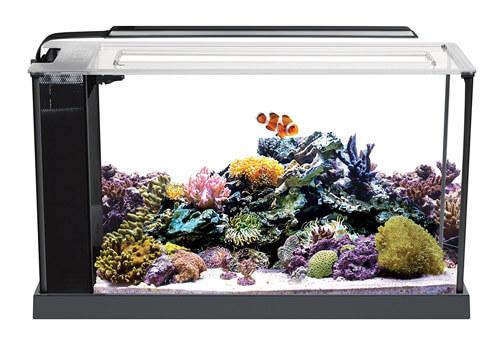 Fluval Nano Reef Tank