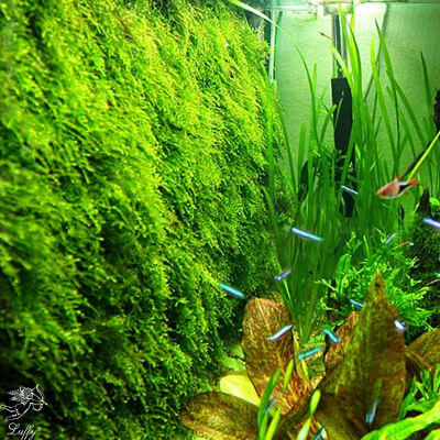 Aquarium Moss Wall/Floor Mesh Kit