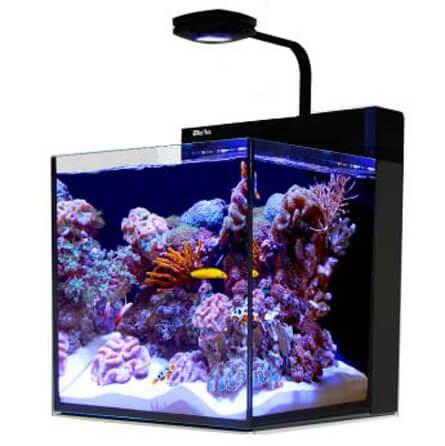 Best Nano Fish Tank