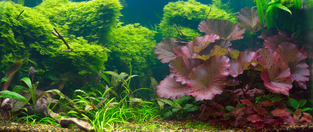 How to decorate an aquarium with plants