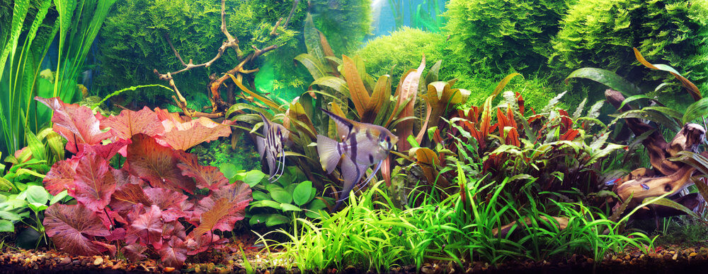 how to decorate a fish tank useful tips everyone needs to know