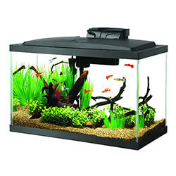 Aqueon Fish Tank for Beginners