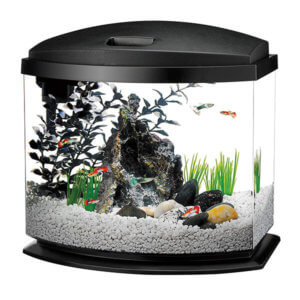5 Gallon Bow Front Aquarium