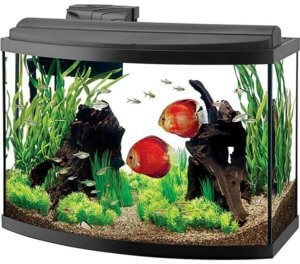 Bow front fish tank