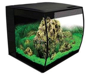 Bow front aquarium