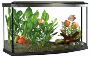 Fluval Bow front aquarium