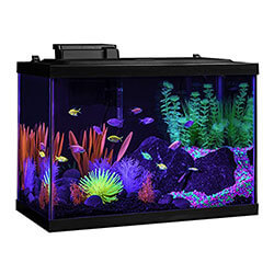 GloFish Beginner Fish Tank