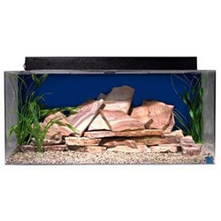 SeaClear Fish Tank For Beginners
