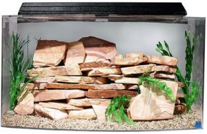 best bow front aquarium