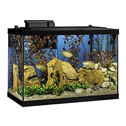 Tetra 20 Gallon Fish Tank For Beginners