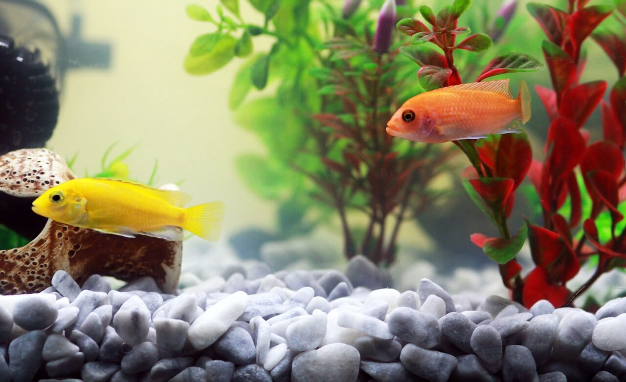 5 Fish Tank Decorations You\'ll Love