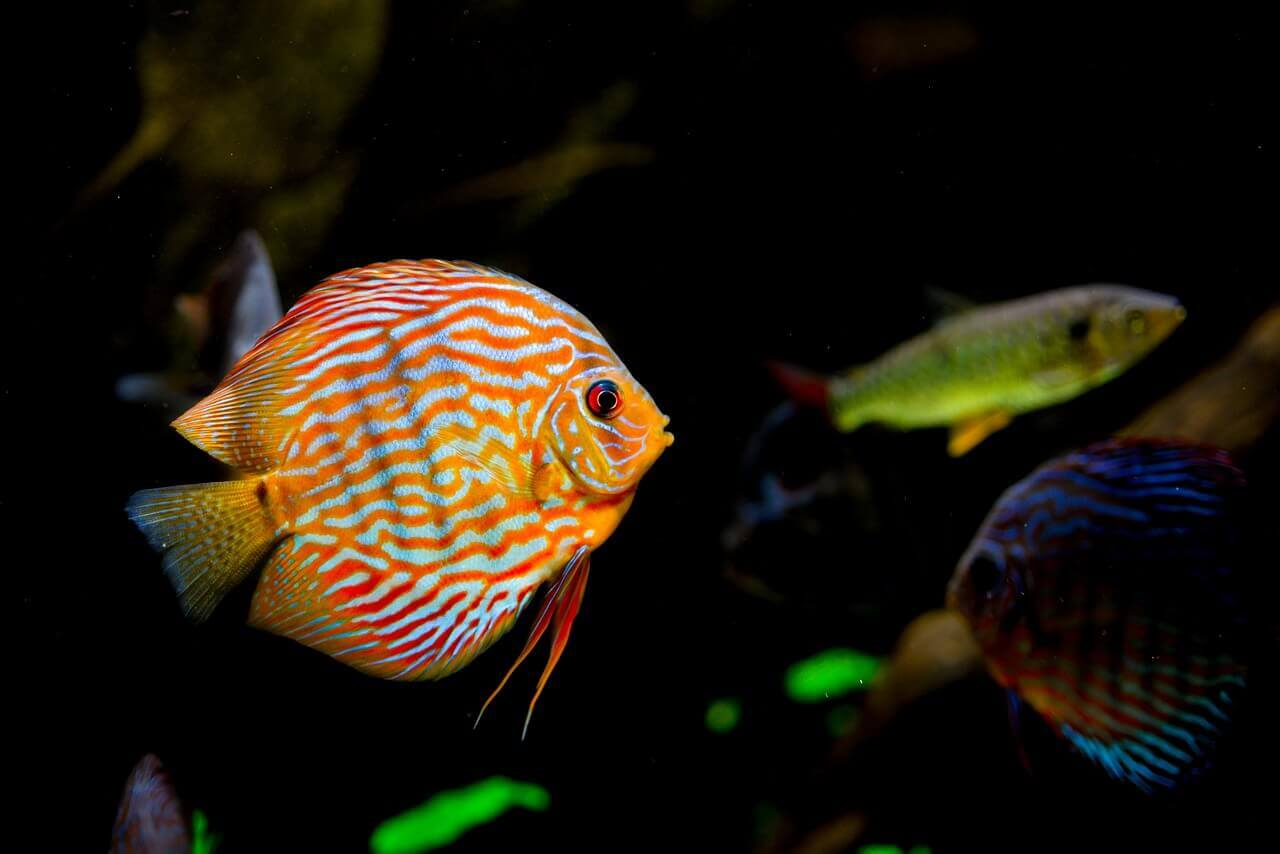 How Often Should I Clean My Fish Tank Filter Fish Tank Club